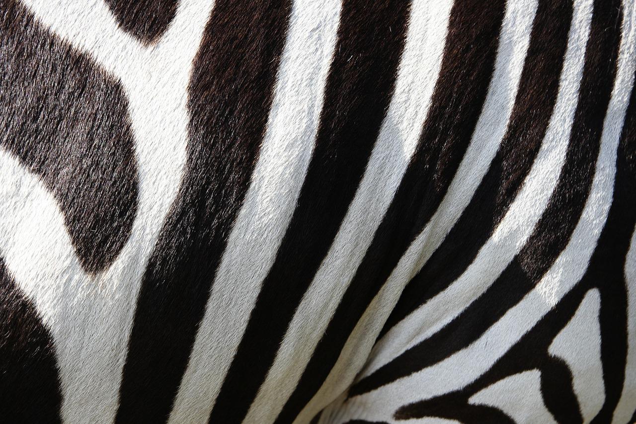Marble zebra